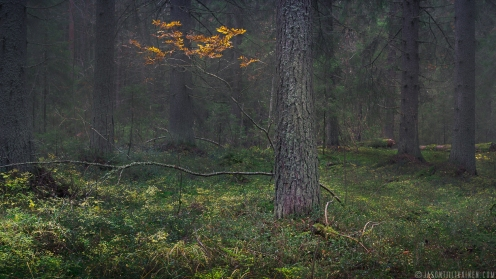 ''AUTUMN BRANCH''. Joensuu, Finland.