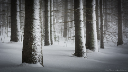 Snowy Spring Forest.