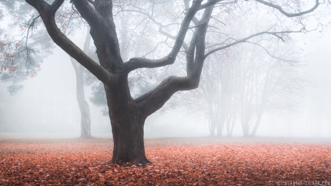 ''FOGGY AUTUMN MORNING''. Joensuu, Finland.