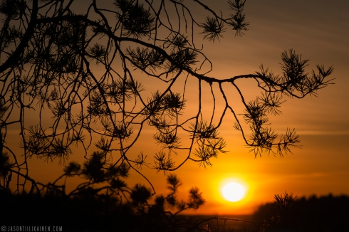 ''SUNSET & BRANCHES''. Joensuu, Finland.