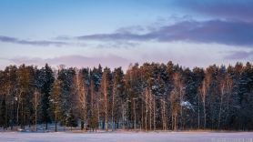 ''WINTER TREES''. Joensuu, Finland.