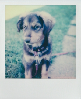 ''PUPPY POLAROID''.