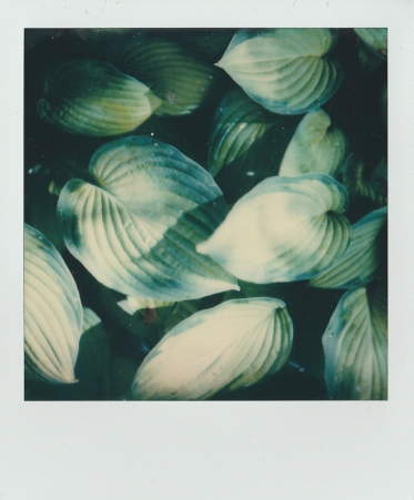 ''POLAROID LEAVES''. Finland.