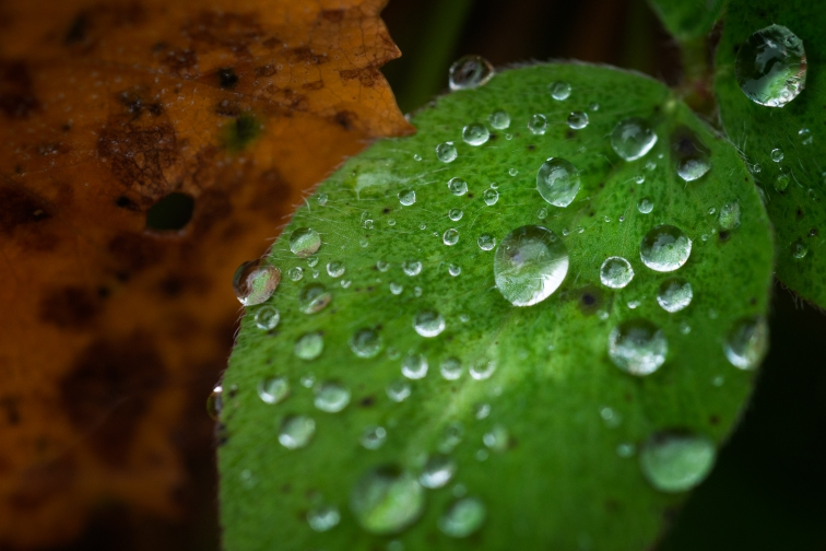 ''AUTUMN DROPS''. Finland.