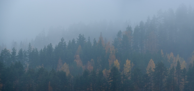 ''TREES IN THE FOG''. Kontiolahti, Finland.