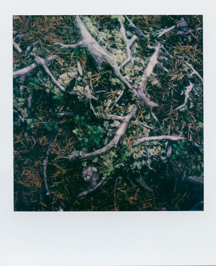 ''ROOTS POLAROID''. Kontiolahti, Finland.